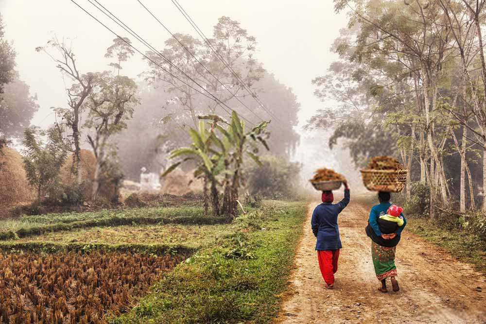 Foggy Scene Terai Nepal