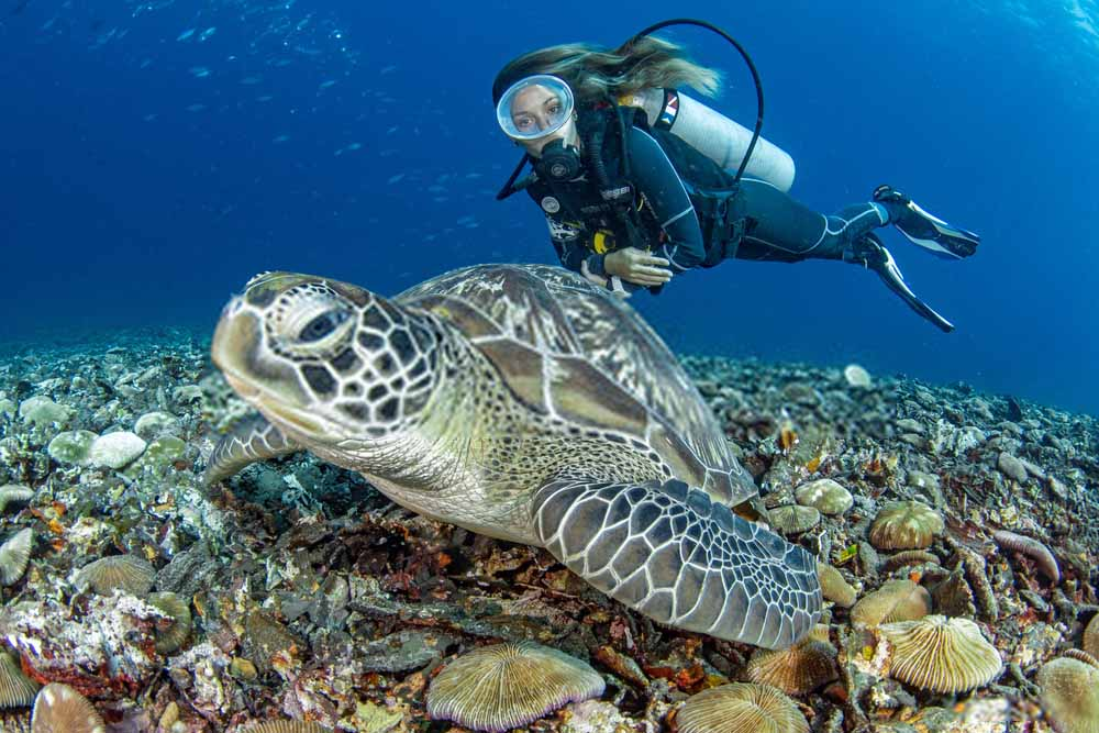 Dive with Turtles in Philippines