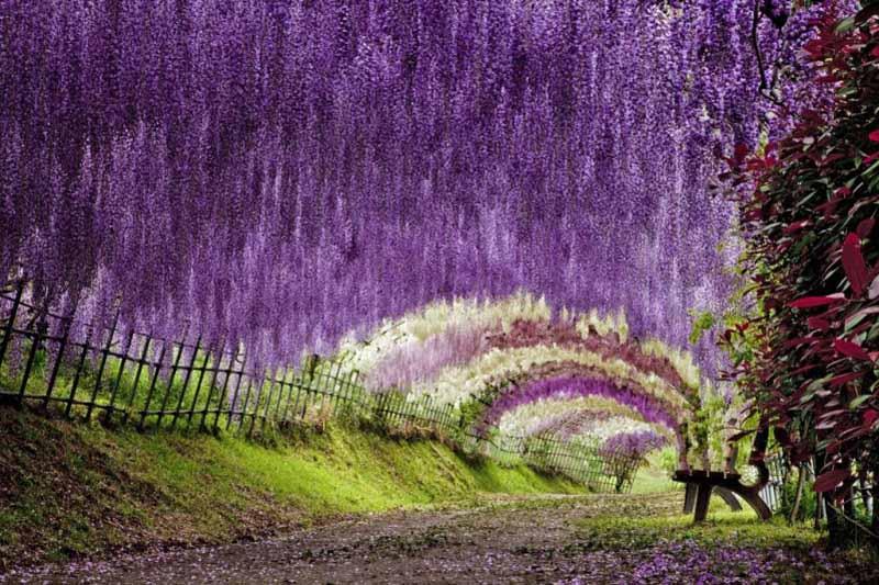 The Kawachi Fuji Gardens