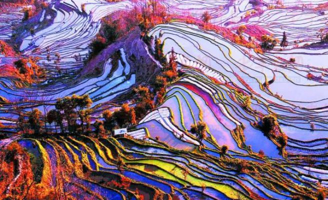 The rice terraces of Yuanyang China